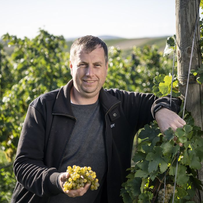 Profile of the winery manager
